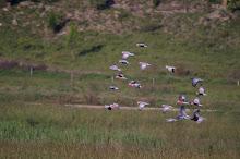 Flock of Parrots!