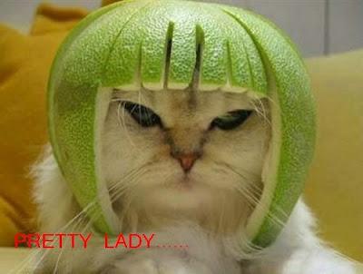 Funny cats: New haircut 爆笑猫猫:新发型