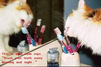 Funny animal picture:Brushing teeth kitty 爆笑动物图:猫咪刷牙