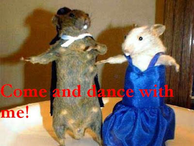 Funny animal picture: Dancing mice 动物搞笑图片:跳舞老鼠