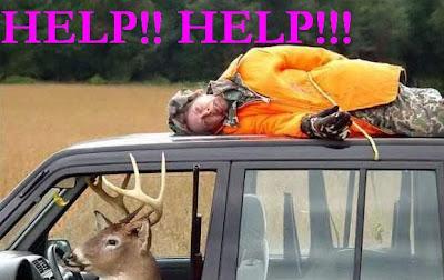 funny photo: deer drive a car 搞笑图片:小鹿驾车
