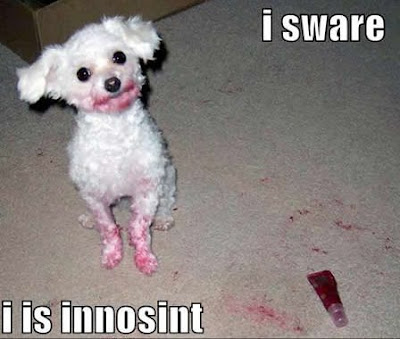 Funny dogs: Innocent dog