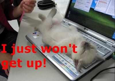 Funny Cats: Revenging cat