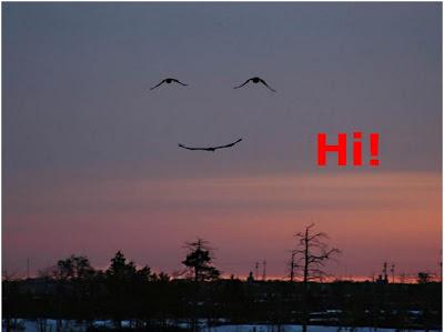 Funny Birds: Art