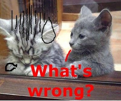 Funny Cats: Sad cat