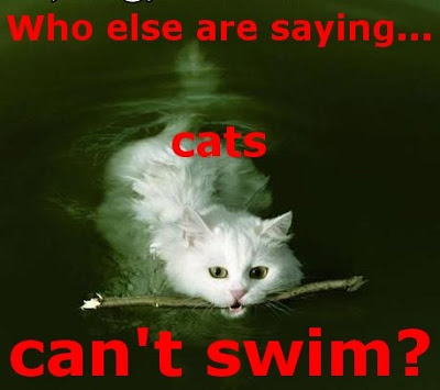 Funny Cats: Swimming cat