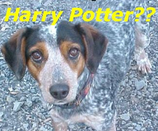 Funny Pictures: Magical Doggy