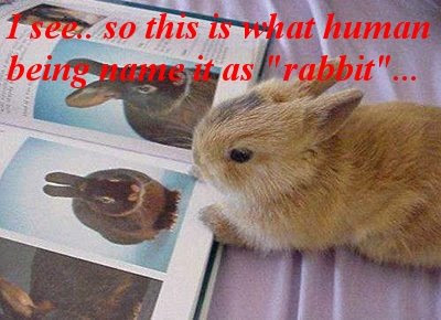 Funny Pictures: Cute rabbits