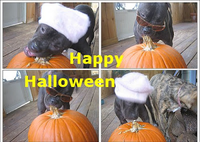 Funny Pictures: Halloween celebration