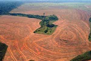 La France impliquée dans la lutte contre l'importation et l'utilisation de bois illégal