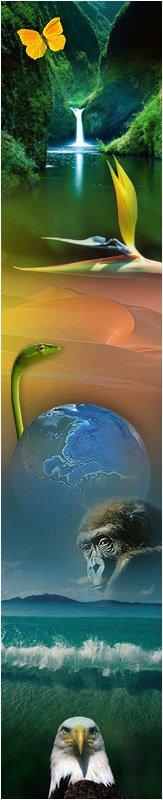 Homme libre, toujours tu chériras la mer ! (C. Baudelaire) dans Videos Planete Terre nature-2