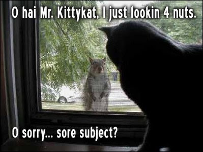 Oh hai Mr kittykat I just looking for nuts