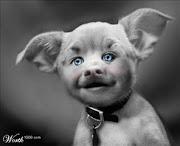 Politicans LOVE Pork