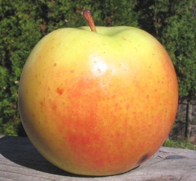 goldrush apple
