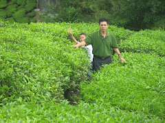 Ladang Boh Tea