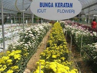 BUNGA-BUNGA SEGAR