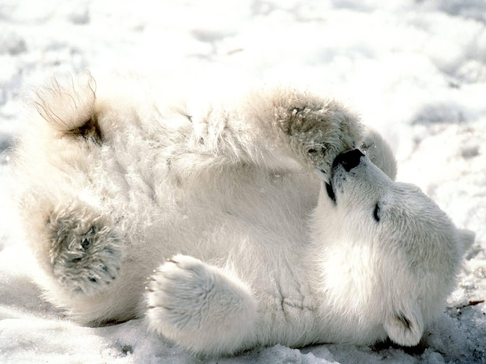 Bears ~ e
