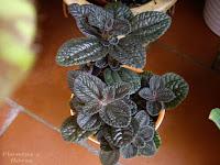 paisajismo jardin jardineria plantas escuela de jardineria