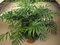 jardineria plantas escuela de jardineria libro de jardineria