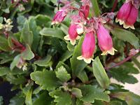 centros de jardineria material jardineria paisajismo jardin