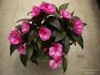 decoracion terrazas plantas jardineria macetas decoracion