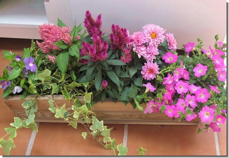 Plantas y flores jardineras de verano - Plantas jardineras exterior ...