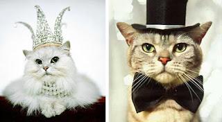 gatos con accesorios elegantes