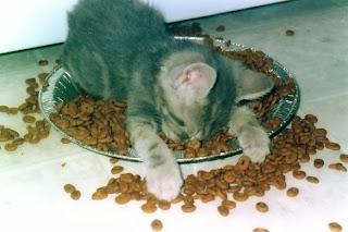 gatito durmiendo sobre su comida