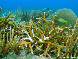 Florida coral reef