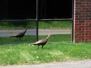 Turkey at Captivate HQ outside Boston