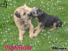 Pip &amp; Rolo