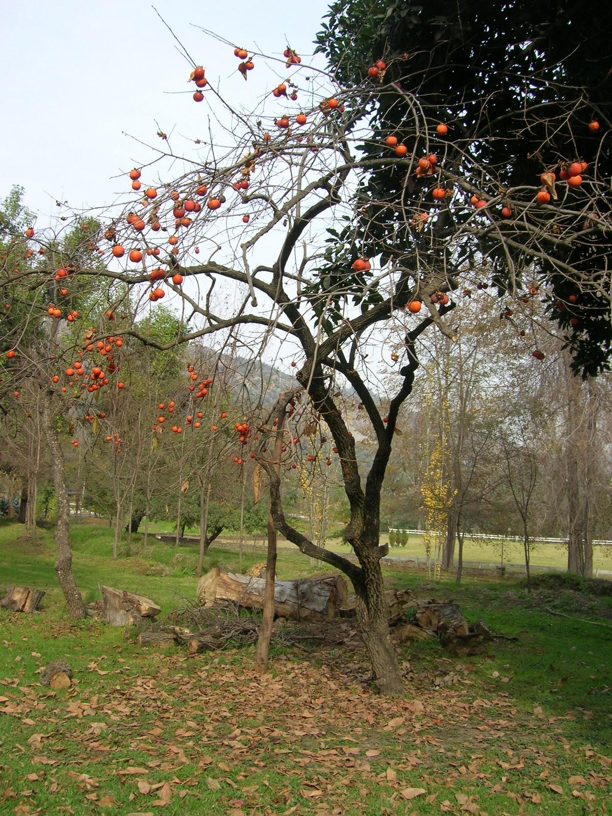 Darrigrandi y simunovic jardineria fotos de maria francisca for Jardineros a domicilio
