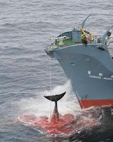 Yummy, dead whale!