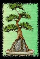 Стиль обнаженные корни на камне бонсай