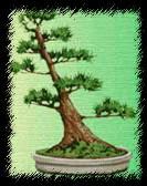 Наклонный стиль бонсай