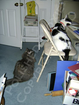 Picture of my two cats investigating my craft table