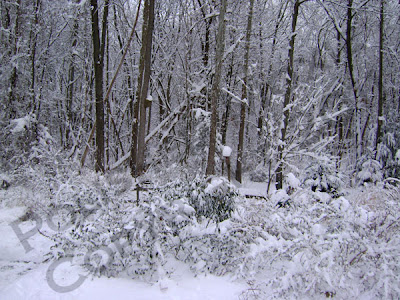 Picture of snow covered butterfly garden