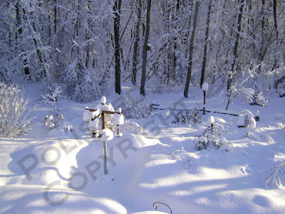 Picture of bird feeding area and garden covered in snow