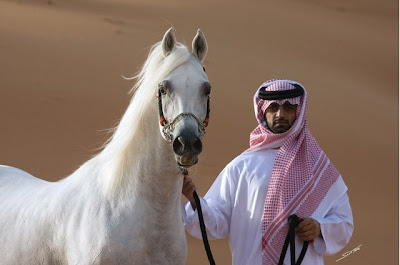 http://2.bp.blogspot.com/_Dz32x3e0KsQ/Sdvi1NgAFII/AAAAAAAACm8/nQb4Iej9nYY/s400/arabian+horse.bmp