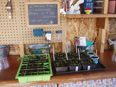 The Potting Shed is, surprisingly, a great place to transplant seedlings. I can hardly wait until the plumbing is re-connected  for the summer!