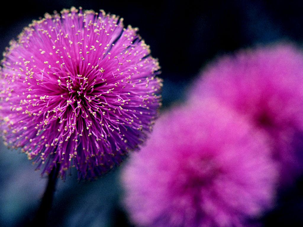 خلفيات ورد 2014 - اجمل خلفيات ورد - خلفيات ورد جديدة 2014 Amazing Flowers 5.jpg