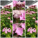 skriv gerne:       mail@lavendel     garden.dk