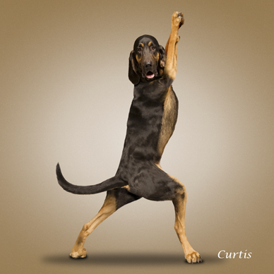 [curtis_yoga_dog.png]