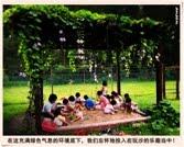 79. 梦里萦绕的乐园