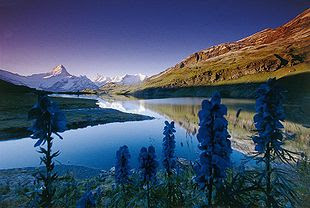 Bachalpsee in the Swiss Alps