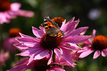 The Dissolute Echinacea.
