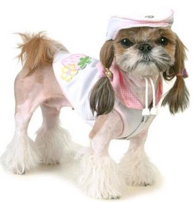 external image dog_fashion_82007.jpg