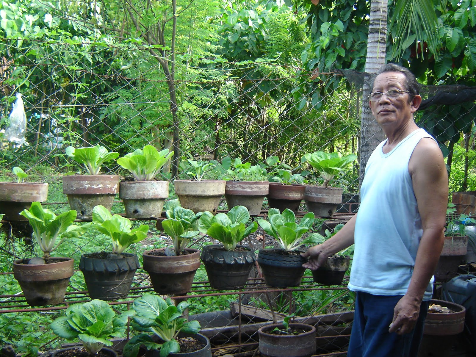 ... magazines magazine htm growing pechay in pots by felix daray published