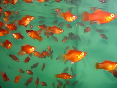 aquarium fishes wallpapers. ofa profile aquarium fish,