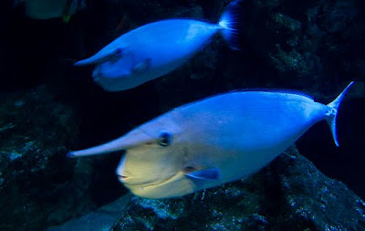 Unicorn Tang Picture